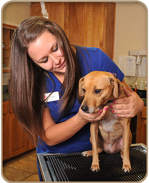 san marcos pet health exams